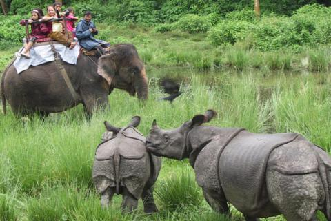 Chitwan National Park Tour-III