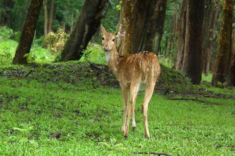 Nagarjun Hiking