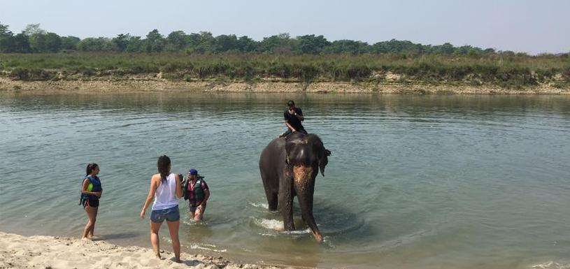 Elephant bath in Chitwan