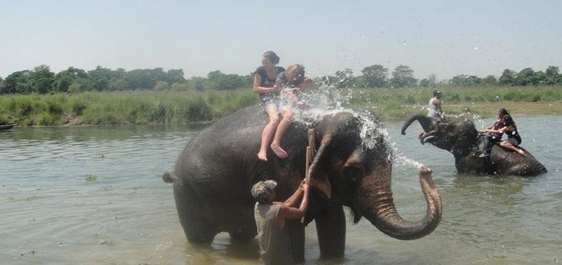Elephant Bathing In Rapti River