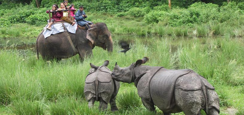 Sighting of rhinos during elephant ride at Chitwan